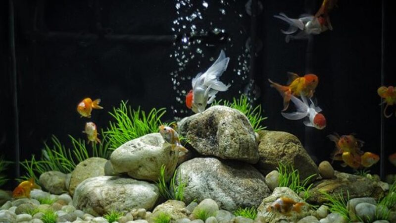 Comment nettoyer son aquarium ?