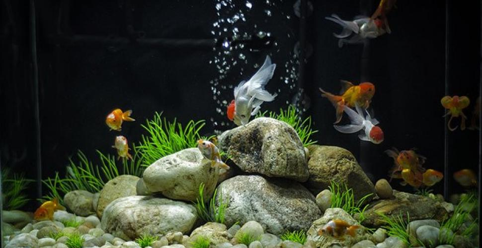 Comment nettoyer son aquarium?